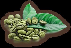 3_coffee_leaf