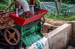 coffeeprocess3.jpg-1024x678