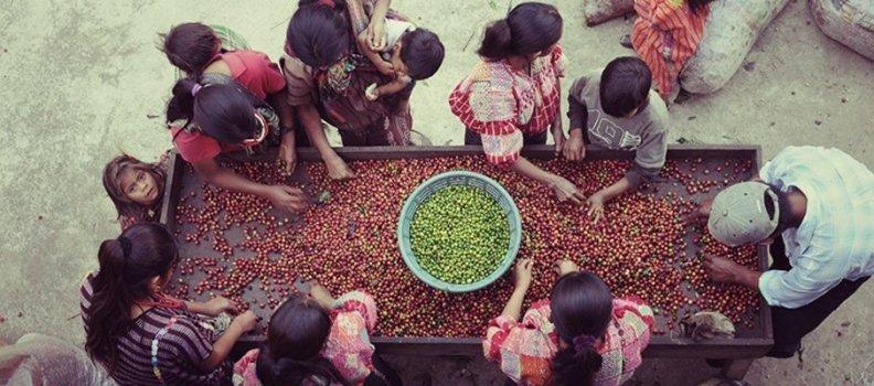 Η φιλοσοφία του Speciality Coffee: Κάθε εβδομάδα και μια καινούργια πρόταση