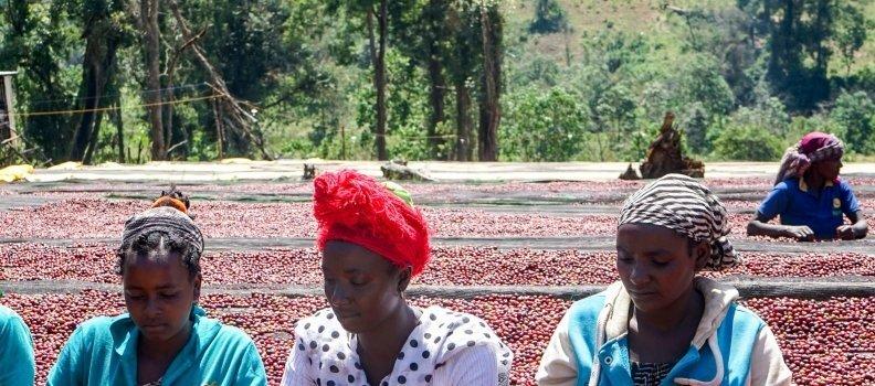 Totally New: Η Kenya του Συνεταιρισμού